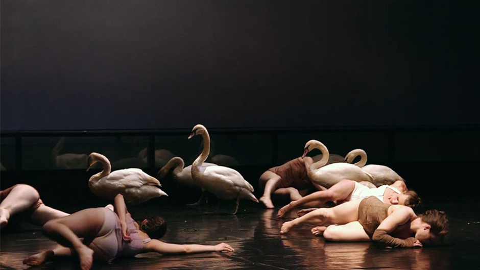 On the stage, ballet dancers dancing with swans -Like animals